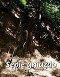Sępie gniazdo. Opowiadanie przygodowe z puszczy południowoamerykańskiej - Edmund Bogdanowicz - ebook