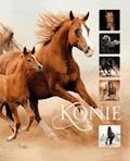 Konie - Ewa Walkowicz - ebook