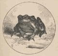 La célebre rana saltarina del distrito de Calaveras - Mark Twain - ebook