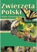 ZWIERZĘTA POLSKI. Atlas ilustrowany  - Dorota Kokurewicz - ebook