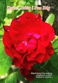 Dzieci, Róża i Pan Bóg - Zygmunt Bołoz - ebook
