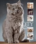 Koty - Karolina Matoga - ebook