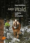 Mein Wald - Peter Wohlleben - E-Book